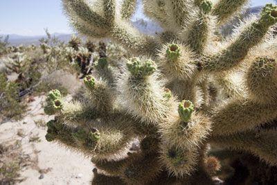 20060909-Joshua-Tree-NP-761605.jpg