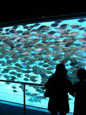 Een hele schol vissen in het aquarium van Seaworld