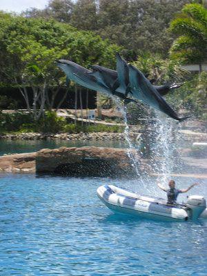 Dolfijnenshow in Seaworld