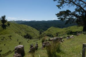 Uitzicht onderweg naar Whanganui