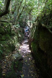 Buller Gorge wandelroute
