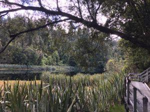 Lake Matheson lookout