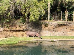 Een nijlpaard