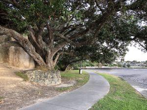 Bomen langs de baai in Auckland