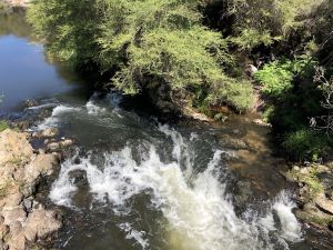 Onze eerste kleine waterval in Te Puia