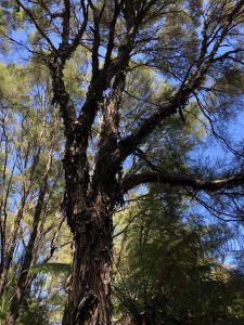 Kapotte boom volgens Fabienne (Bob de Bouwer moest hem maar komen maken)