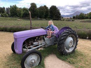 Paarse tractor - Lavendel Farm Wanaka