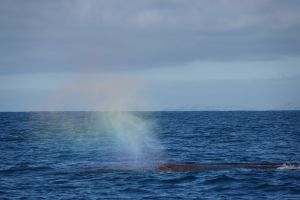 Regenboog boven spermwhale